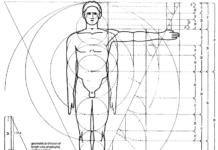 sezione aurea corpo umano